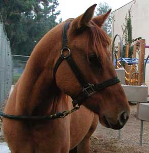 Older of Two Colts - Cedar Fire 2003