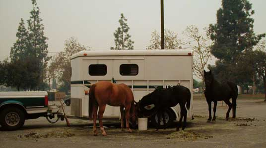 Two Colts from Blossom Valley - Cedar Fire 2003