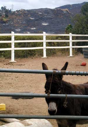 Eeyore Back Home, Charred Hills in the Background - Cedar Fire 2003